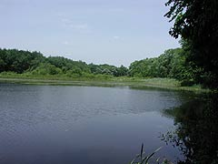 Wheeler Pond